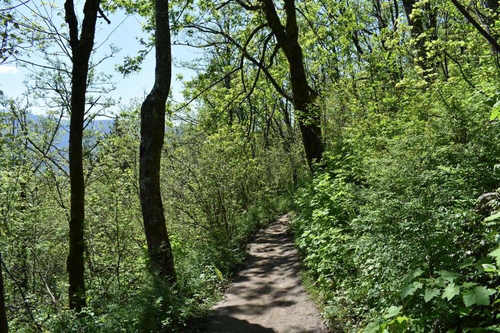 hike pic